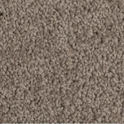 Giles-Carpets-Auckland-Godfrey_Hirst-Enchant_48-Stonewashed