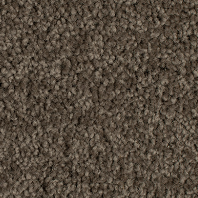 Giles-Carpets-Auckland-Godfrey_Hirst-Enchant_48-Woodland